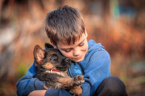 Taubheit bei Hunden im Welpenalter diagnostizieren