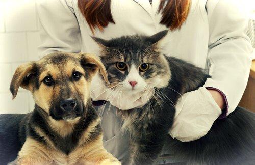 Hund und Katze beim Besuch beim Tierarzt