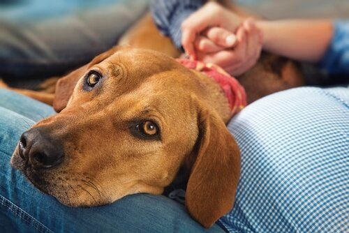 Brusttumore bei Hunden