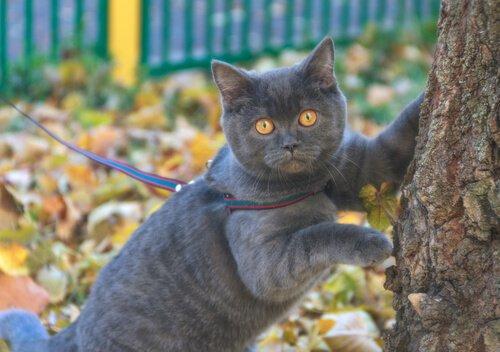Clicker für Katzentraining