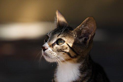 Die Wahl der Katze bei der Adoption