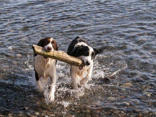 Welcher ist der ideale Partner für deinen Hund?