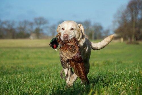 Wie findest du heraus, ob dein Hund ein Jagdhund ist?