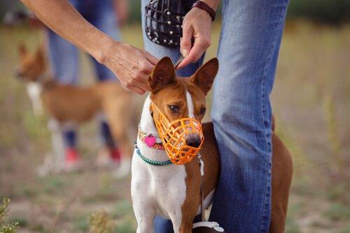 Verschiedene Arten von Maulkorb für Hunde
