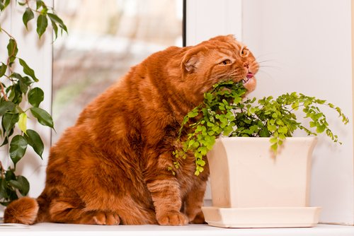 für Katzen sind mache Pflanzen gefährlich