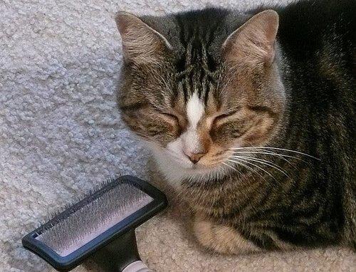 Fellpflege bei Katzen