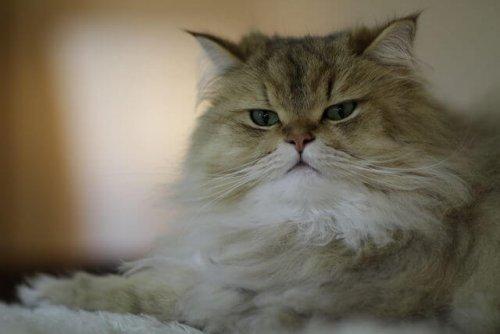 Fellpflege einer Katze