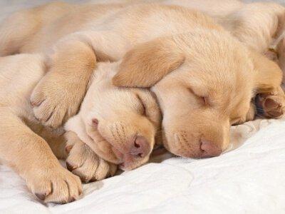 Gesundheitsplan für jede Lebensetappe des Hundes
