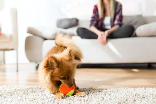 Grundlagen der Körpersprache bei Hunden