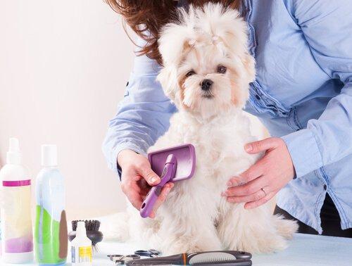 Was zu tun, um Haarausfall zu vermeiden?