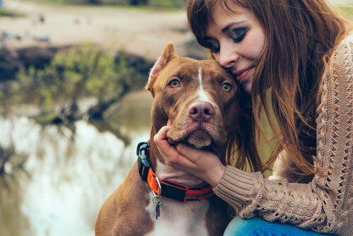richtige Haustierpflege bei Hunden
