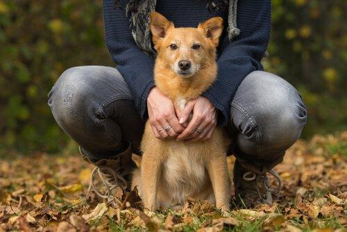 Herzschwäche Beim Hund Deine Tiere