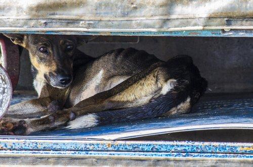 Hund schützt sich vor Naturkatastrophe
