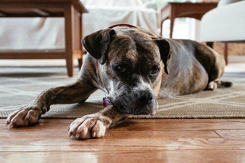 Krampfanfälle bei Hund vermeiden