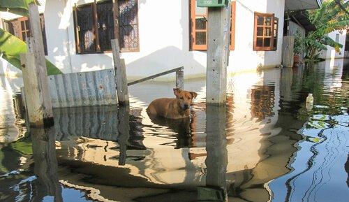 Wie du dein Haustier bei Überschwemmungen schützt