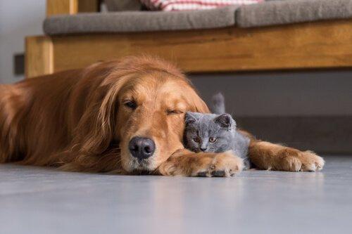 Hund und Katze sind sich nicht immer Spinnefeind.