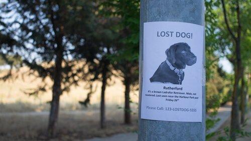 Hänge Plakate auf, wenn dein Hund verloren gegangen ist.