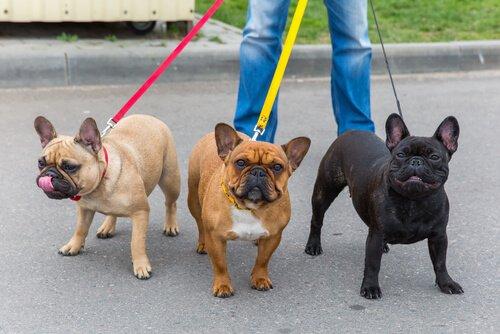 Hundesitter mit drei Hunden