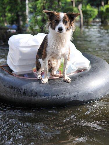 Hunde haben auch Angst bei Überschwemmungen