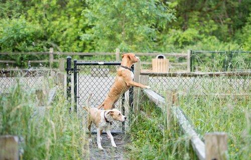Hunde wollen ausbüchsen
