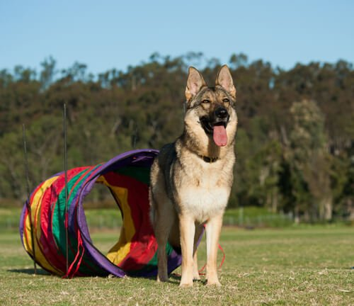 Hundespiele im Park