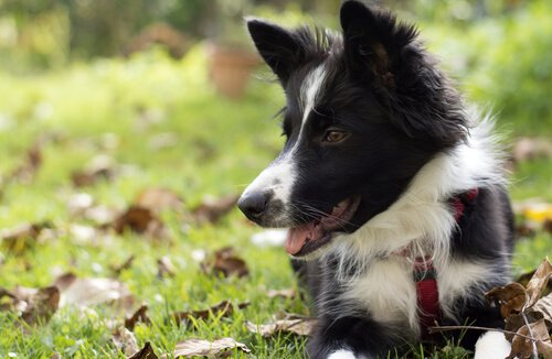 6 instinktive Verhaltensweisen bei Hunden