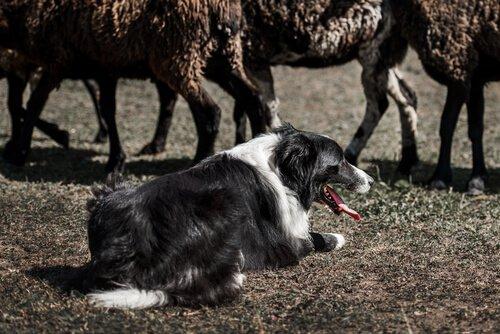 Instinktive Verhaltensweisen bei Hunden