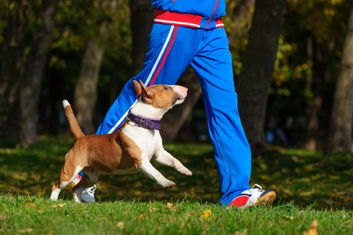 Jogging durch den Park verbrennt Kalorien!