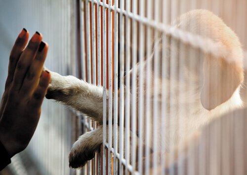 Auch wenn du nicht adoptieren kannst, kannst du trotzdem helfen!