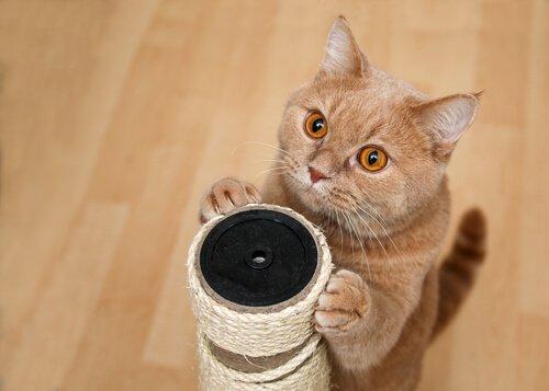 Wie du deiner Katze Tricks beibringen kannst