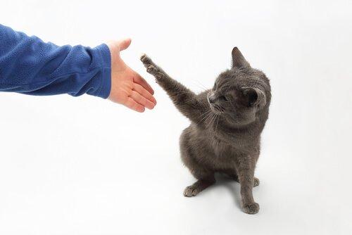 Wie du deiner Katze Tricks beibringen kannst - Pfötchen geben