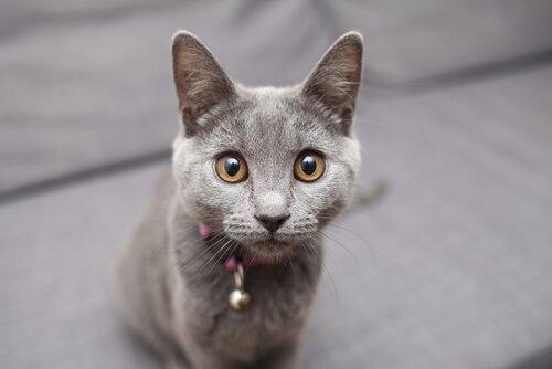 Katzenmassage macht Katze glücklich