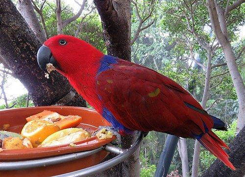 Lebensmittel für Papageien