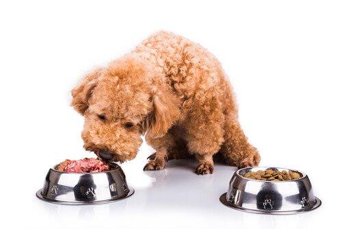 Natürliches Futter für Haustiere