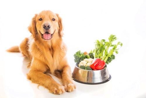 natürliches Futter für Hunde: Gemüse
