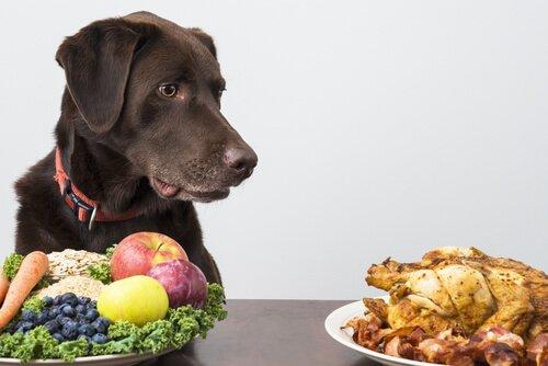 natürliches Futter für Hund: Gemüse und Hühnchen