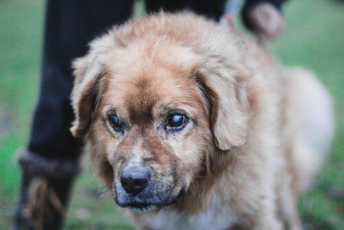 Tipps zur Pflege von blinden Hunden