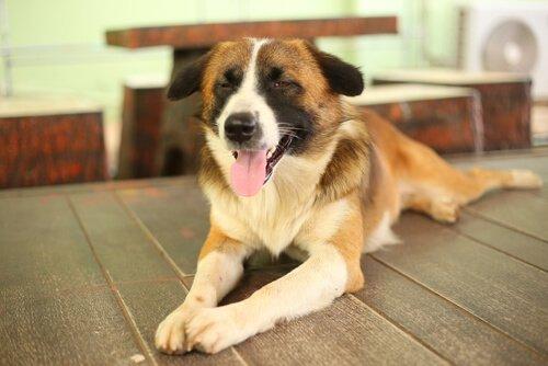 Pflege von blinden Hunden im Haus