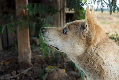 Pflege von blinden Hunden im Park