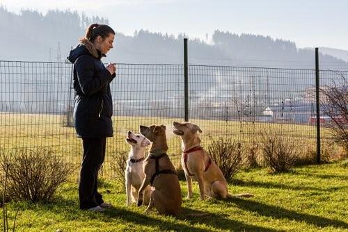 positive Hundeerziehung - Frau trainiert Hunde
