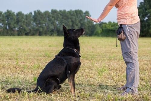positive Hundeerziehung - Hund beim Training