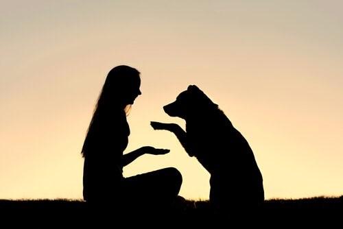 Positive Hundeerziehung: Was genau bedeutet das?