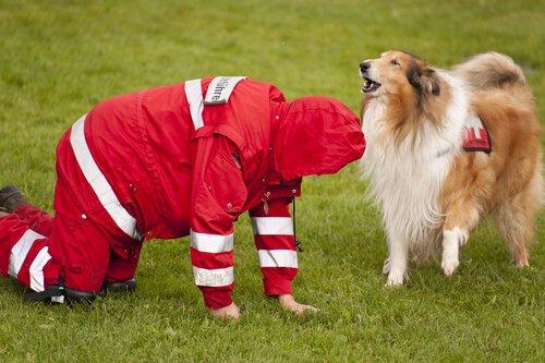 Rotes Kreuz bildet Such- und Spürhunde aus