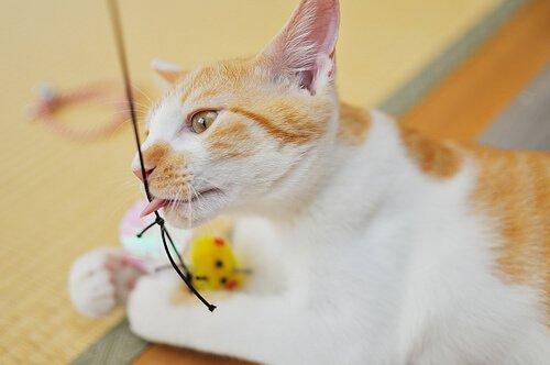 Spiele für Katzen, die für Spaß und Bewegung sorgen