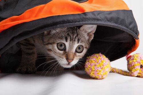 Spiele für Katzen sorgen für Beschäftigung.