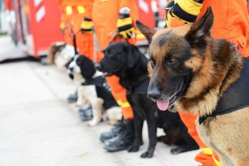 Such- und Spürhunde – Was weißt du über sie?