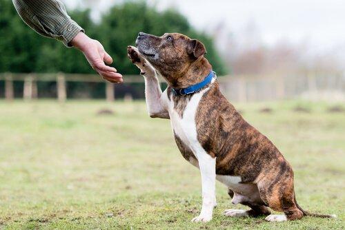 Taubheit bei Hunden diagnostizieren