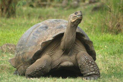 Top 8 der langlebigsten Tiere
