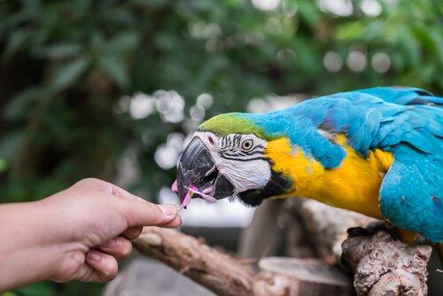 Unschädliche Lebensmittel für Papageien.