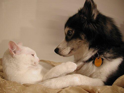 Verhütungsmittel bei Hunden und Katzen